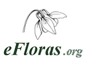 网络版世界植物志 efloras.org