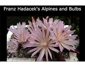 奥地利弗兰兹海达克的高山和球根花卉 Franz Hadacek's Alpines and Bulbs