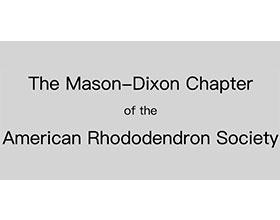 美国杜鹃花协会的梅森-狄克逊分会 The Mason-Dixon Chapter of the American Rhododendron Society