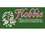 德国霍比杜鹃 Hobbie Rhododendron