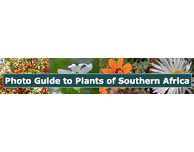 南非植物指南 Photo Guide to Plants of Southern Africa
