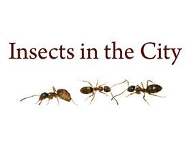 城市中的昆虫 Insects in the City