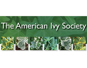 美国常春藤协会 The American Ivy Society