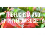 美国新奥尔良吊钟海棠和昙花协会 THE FUCHSIA AND EPIPHYLLUM SOCIETY OF CRESCENT CITY