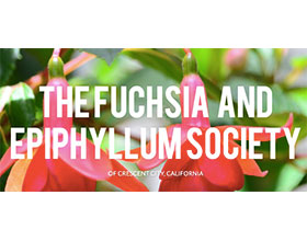 美国新奥尔良吊钟海棠和昙花协会 THE FUCHSIA  AND EPIPHYLLUM SOCIETY OF CRESCENT CITY