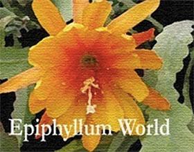 美国昙花世界苗圃 Epiphyllum World