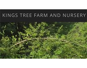 美国国王林场和苗圃 Kings Tree Farm and Nursery