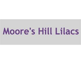美国摩尔山丁香 Moore's Hill Lilacs
