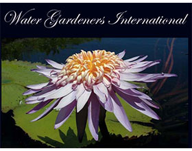 国际水花园园丁 Water Gardeners International