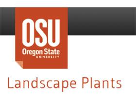 俄勒冈州立大学农业科学学院园艺系 Oregon State University College of Agricultural Sciences Department of Horticulture Landscape Plants