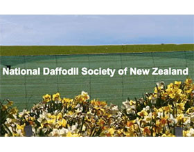 新西兰国家水仙花协会 National Daffodil Society of New Zealand (NDSNZ)