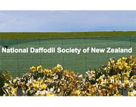 新西兰水仙花协会 National Daffodil Society of New Zealand (NDSNZ)