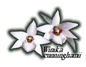 新西兰兰花委员会 The Orchid Council of New Zealand