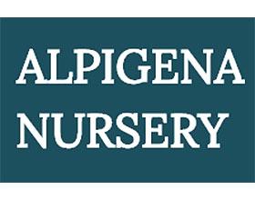 荷兰高山植物苗圃 ALPIGENA NURSERY