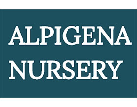 荷兰高山植物苗圃 ALPIGENA NURSERY