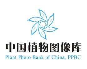 中国植物图像库 Plant Photo Bank of China(PPBC)