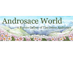 报春花科点地梅属世界 Androsace World