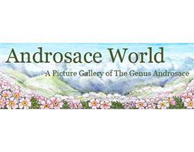 报春花科点地梅属世界 Androsace World
