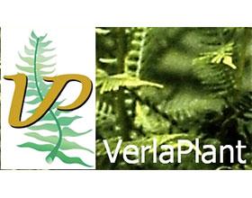 荷兰VerlaPlant苗圃