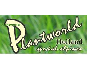 荷兰植物世界苗圃 Plantworld Holland