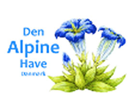 丹麦高山植物协会 Den Alpine Have – Denmark