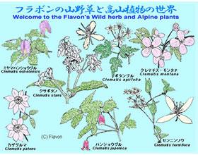 日本 Flavone 野生香草和高山植物世界 Flavon's Wild herb and Alpine plants