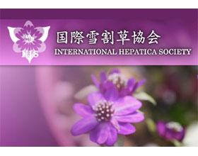 国际雪割草(獐耳细辛)协会 INTERNATIONAL HEPATICA SOCIETY
