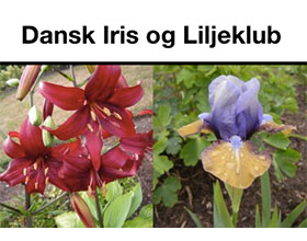 丹麦鸢尾花和百合俱乐部 Dansk Iris og Liljeklub