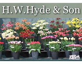 英国 H.W.Hyde & Son 苗圃