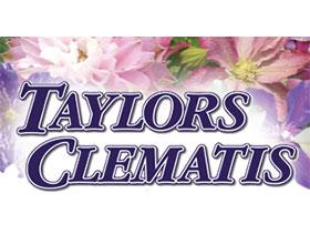 英格兰泰勒斯铁线莲苗圃 Taylors Clematis Nursery