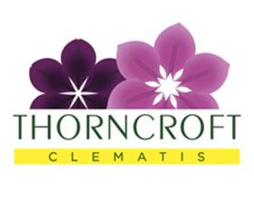 英国桑克罗夫特铁线莲 Thorncroft Clematis