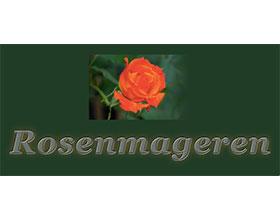 丹麦Rosemary玫瑰