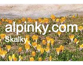 捷克高山园艺 alpinky.com