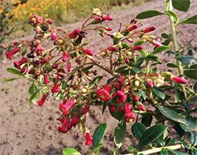 产生重大影响的矮生灌木 DWARF shrubs with BIG impact