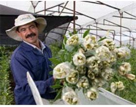 南美花卉业巨头-哥伦比亚