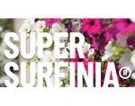 超级观赏植物品牌 Surfinia®
