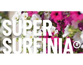 超级品牌 Surfinia®