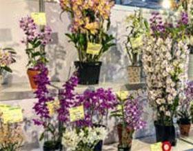 2019年中国台南国际兰花展