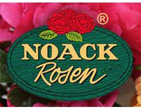 德国玫瑰苗圃 NOACK ROSEN