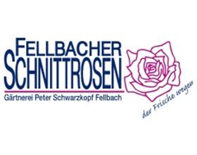 德国Fellbacher切花月季
