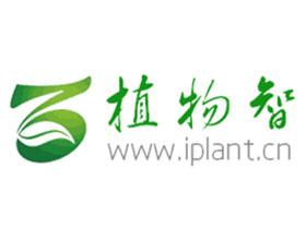 iPlant植物智-中国植物物种信息系统
