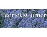 美国Pedricks Corner薰衣草和倒挂金钟苗圃
