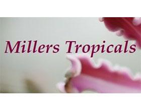 美国米勒的兰花和珍稀热带植物 Millers Tropicals