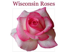 美国威斯康星月季 Wisconsin Roses