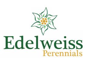 美国雪绒花多年生植物苗圃 Edelweiss Perennials