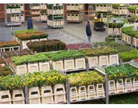 荷兰花卉出口在2019年前6个月增长3%