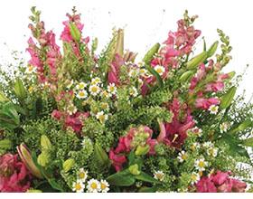 Gregor Lersch格雷戈尔勒希出席首届墨西哥观赏植物和花卉展