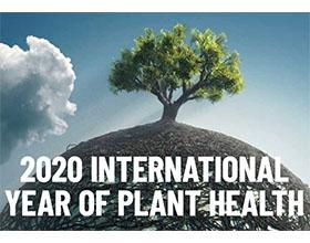 2020国际植物健康年
