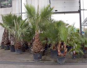 欧盟启用新的植物健康法规