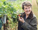 平衡英国的植物健康合规性和前瞻性行业战略